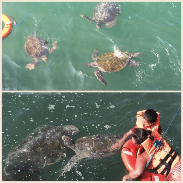 Nadando con las tortugas