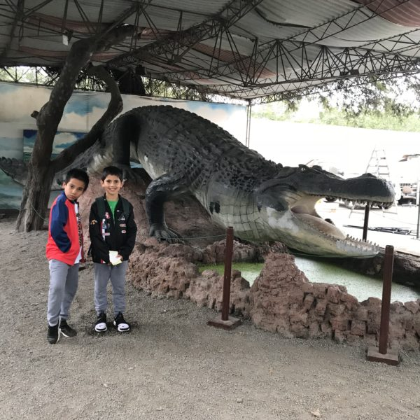 Caimán gigante que habitaba en el Mar de Pebas, una laguna gigante en Ucayali (hace 12 millones de años).